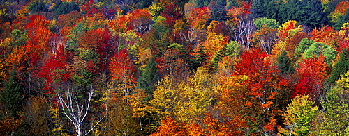 Forest in indian summer, Vermont, New England, USA