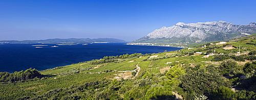 Coastal panorama with vineyards, overlooking the Island of Korcula, Orebic, Peljesac Peninsula, Dalmatia, Croatia, Europe