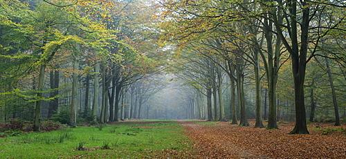 Woodland scene from Felbrigg, Norfolk, England, United Kingdom, Europe