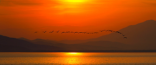 Great Cormorants at sunset, Lake Kerkini Greece