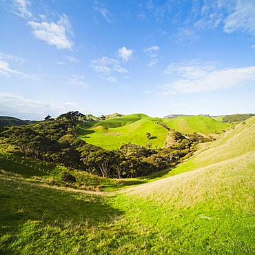 Countryside on the walk to Wharariki Beach, Wharariki, Golden Bay, Tasman Region, South Island, New Zealand, Pacific