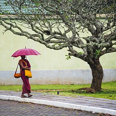 Buddhist monk at Sri Maha Bodhi in the Mahavihara (The Great Monastery), Sacred City of Anuradhapura, UNESCO World Heritage Site, Sri Lanka, Asia