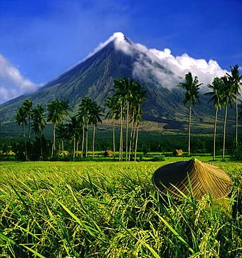 Ricefarmer and Mayon Volcano near Legazpi City, Legazpi, Luzon Island, Philippines