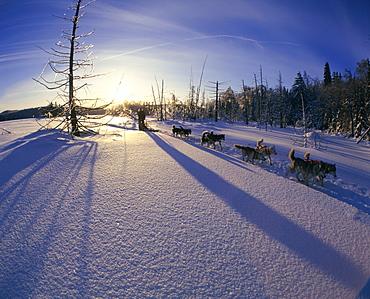 Dog-Sledding on Frozen Lake, Lanaudiere County, Entrelacs, Quebec