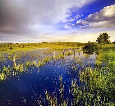 Pastureland after Rain storm, near Cochrane, Alberta, Canada