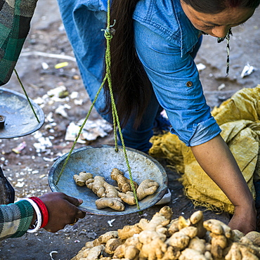 A woman weighs pieces of fresh ginger root on a scale, Darjeeling, West Bengal, India