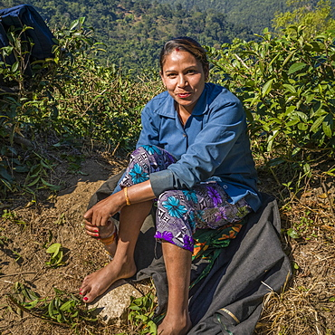 Portrait of a female worker sitting in bare feet, Kambal Tea Garden, West Bengal, India