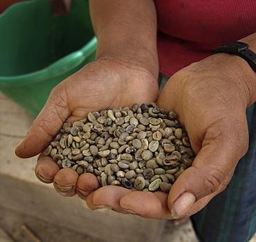 Honduras woman holding coffee beans. Marcala