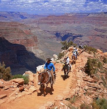 Returning on horseback, Grand Canyon, UNESCO World Heritage Site, Arizona, United States of America, North America
