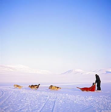 Husky dog sled team, Spitsbergen, Norway, Europe