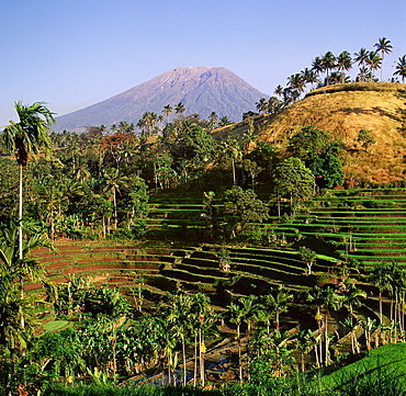 View of Gunung Agung from the rice fields of Karangasem, Bali, Indonesia, Southeast Asia, Asia