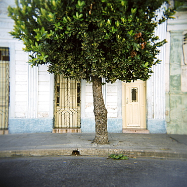 Tree and architectural detail, Cienfuegos, Cuba, West Indies, Central America