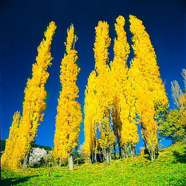 Autumn, Sin, Pyrenees, Huesca province, Spain