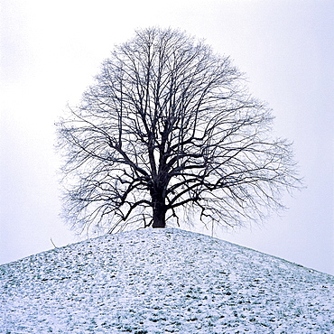 Natur, Jahreszeiten, Winter, Schneelandschaft, Laubbaum auf einem Huegel, blattlos, Geaest, plakativ, Schweiz, nature, seasons, winter, snowy landscape, deciduous tree on a hill, leafless, branchwood, eye-catching, Switzerland, nature