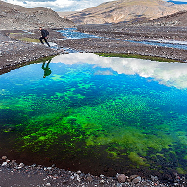 Man hiking by a pond with algae and ash  Landscape still filled with ash from the Eyjafjallajokull Volcanic eruption back in 2010, Iceland