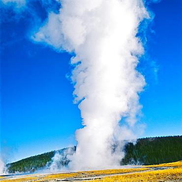 Oil Faithfull Geiser Yellowstone National Park Wyoming United States of America USA.