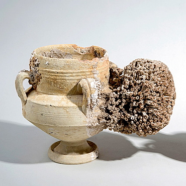 An Islamic Terracotta vase with 4 handles, strainer and spout 9th century CE. Found in the western Mediterranean sea. The spout is covered with a large coral.