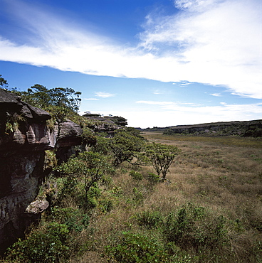 Mount Roraima summit, swamp and scrub, Brazilian sector, Roraima State, Brazil, South America