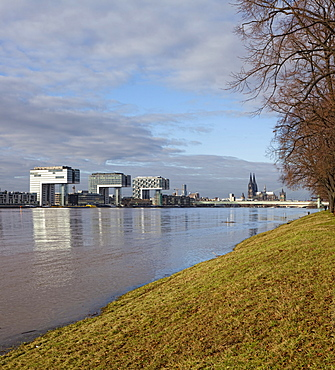 View over the polder meadows on the left bank of the Rhine River and the Kranhaus buildings at the Rheinauhafen harbour during high water, Rhine River, Cologne, North Rhine-Westphalia, Germany, Europe