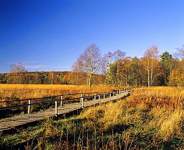 Schopflocher Moor peat bog, Lenningen, Swabian Alb, Baden-Wuerttemberg, Germany, Europe