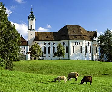 Wieskirche near Steingaden, sheep, Pfaffenwinkel, Upper Bavaria, Germany
