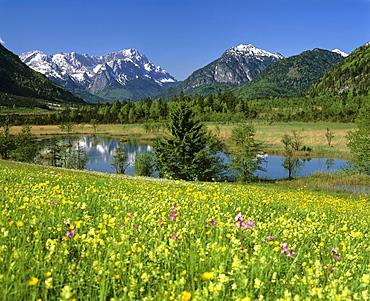 """Flower meadow in springtime, mountain landscape, Seven Springs (""""Sieben Quellen""""), moorland, near Eschenlohe, Loisach Valley, Muehlbach, Upper Bavaria, Bavaria, Germany, Europe"""
