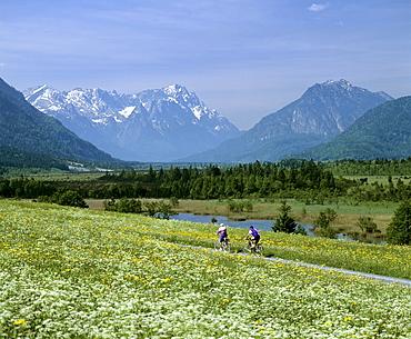Cyclists in field lane, flower meadow in springtime, mountain landscape near Eschenlohe, Upper Bavaria, Bavaria, Germany, Europe