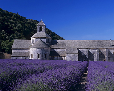 Lavender fields in front of Senanque abbey in Gordes, Provence, France