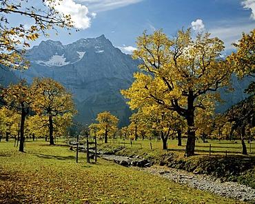 Grosser Ahornboden, Spritzkarspitze, Eiskarln, Karwendel, Tyrol, Austria