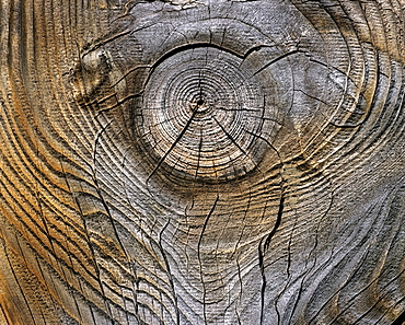 Wood grain, knothole