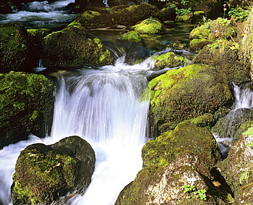 Small waterfall in a mountain stream lined in moss-covered rocks, movement