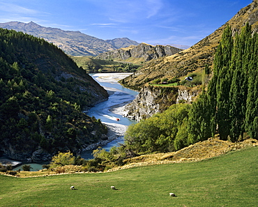 Shotover River, motorboat, Arthur's Point, Queenstown, South Island, New Zealand