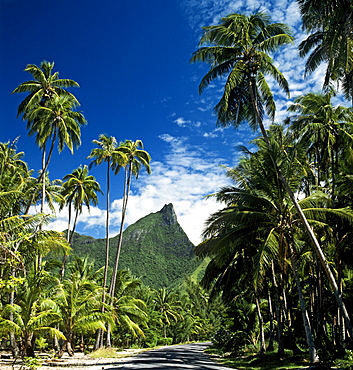 Palm trees, Moorea, Society Islands, French Polynesia, South Pacific, Oceania