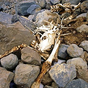 Skeleton, Anatolia, Turkey