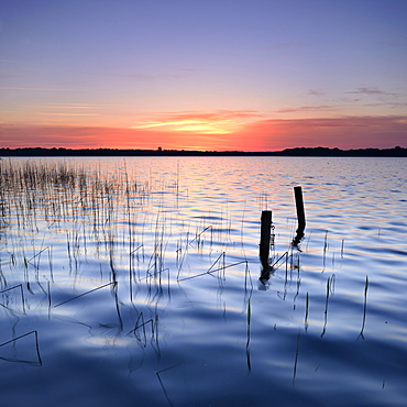 Reeds and poles in the lake at sunrise, Lake Schaal, Mecklenburg-Western Pomerania, Germany, Europe
