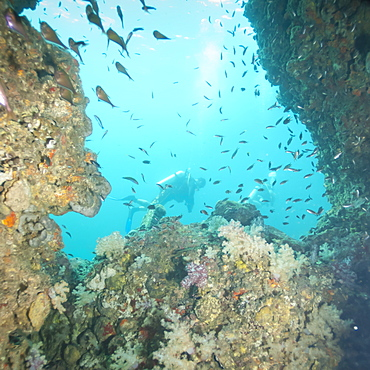 Scuba diving, Southern Thailand, Andaman Sea, Indian Ocean, Southeast Asia, Asia