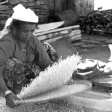 Woman Willowing Maize. Annapurna Trail near Pokhara.