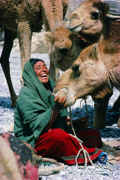 Baluch nomad woman with camels, Pakistan, Asia