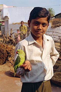 Boy with pet parrot, Dhariyawad, Rajasthan state, India, Asia