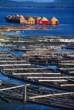 Logs booms on the Campbell River, British Columbia, Canada, North America
