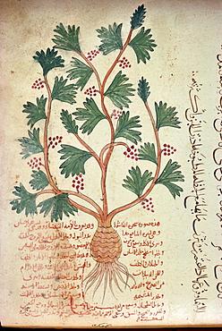 Islamic manuscript, Iran, Middle East