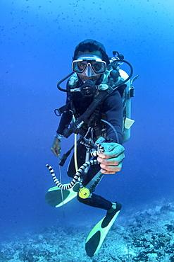 Diver and Banded Sea Snake Laticauda colubrina