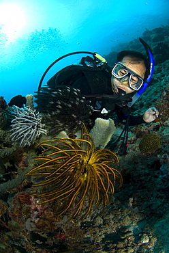 Feather Starfish or Crinoid & diver. Siamil Island, Malaysia