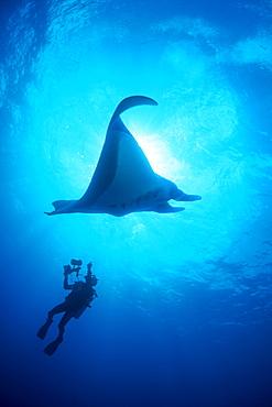Manta Ray & diver. Socorro, Mexico