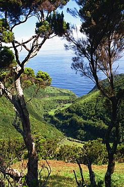 Caldeira de Cima, Sao Jorge, Azores, Portugal, Atlantic, Europe