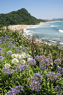 Hot Water Beach, Coromandel Peninsula, South Auckland, New Zealand, Pacific