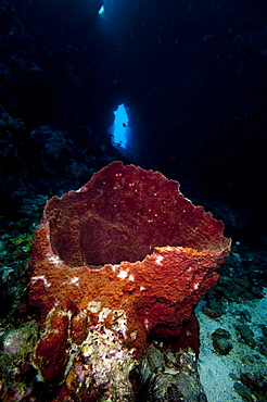 Swim through with giant sponge, Dominica, West Indies, Caribbean, Central America