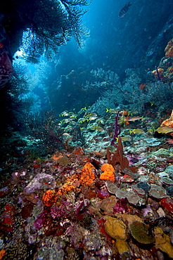 Reef scene, Dominica, West Indies, Caribbean, Central America