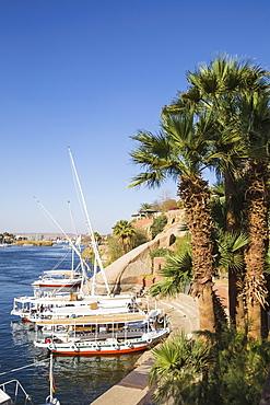 Gardens of Old Cataract Hotel, Aswan, Upper Egypt, Egypt, North Africa, Africa