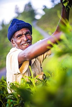 Portrait of a tea picker in a tea plantation in the Sri Lanka Central Highlands, Sri Lanka, Asia